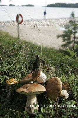 За грибами в Хельсинки